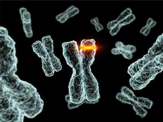 El neodarwinismo y las mutaciones
