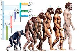 """¿Por qué la teoría de la evolución no es """"la base de la biología""""?"""