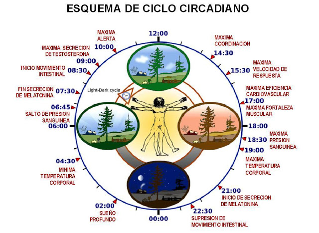 ciclo_circadiano