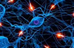Nuestros cuerpos están equipados con una red de cables bio-electricos, conocidos como nervios,  con miles de metros de longitud