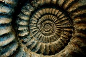 El darwinismo frente a la evidencia de los fósiles vivos.