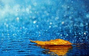 La cantidad de lluvia que cae cada año es esencial para un correcto mantenimiento del ecosistema en la tierra