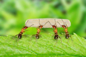 Las hormigas son un insecto que a veces puede parecer trivial, pero del que podemos aprender mucho