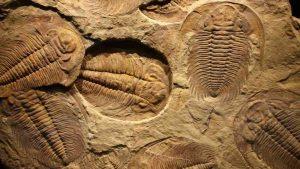La paleontología no puede ofrecer respuestas al porqué de la evolución