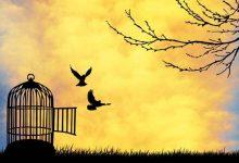 El Islam nos proporciona las herramientas para alcanzar la libertad verdadera, la libertad del alma