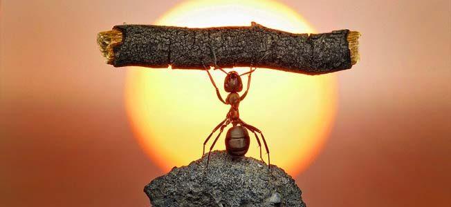 La fuerza de voluntad es una importante herramienta para desarrollar todo el potencial que llevamos dentro