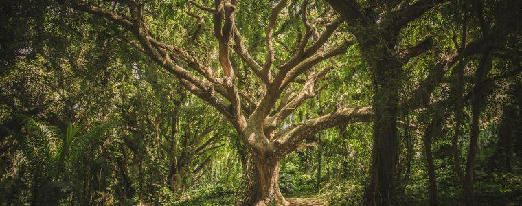 ¿Podemos vivir en armonía con la naturaleza? (4/4): Tecnologías tradicionales