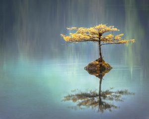 Da un pasto atrás y mira al universo y a ti mismo, al hacer esto podrás ser testigo de ti mismo siendo testigo de ti mismo, siendo atestiguado por Quien todo lo ve.