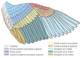 El diseño de la biodiversidad