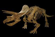 La existencia de los dinosaurios desde una perspectiva islámica no es problemática, puesto que Dios es el creado de todas las criaturas, existentes o que han existido