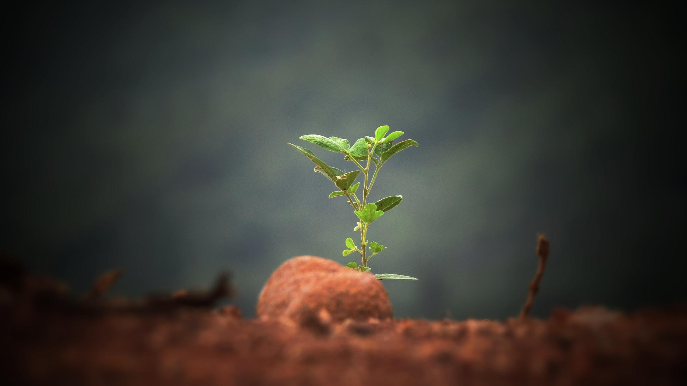 Una de las funciones de la lluvia es vivificar una tierra 'muerta' a través de las partículas fertilizantes procedentes de la evaporación del mar, algo que es mencionado en el Corán
